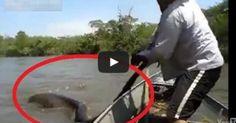 Βραζιλιάνοι βρήκαν το μεγαλύτερο φίδι στον κόσμο!!!