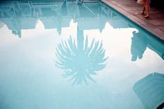 Swimming Pools and Palm Trees