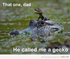 Get him dad!