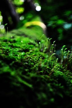 Green Moss Close up | Flickr - Photo Sharing!