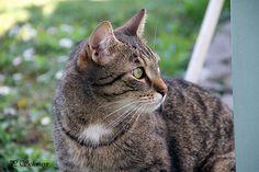 Unser Kater auf Mäuseschau ;-) von kreativesbypetra #kater #katze #cat #cats #catlife #katzenliebe #katzenfoto #frühling #spring Petra, Photos, Animals, Canvas, Pictures, Animais, Animales, Animaux, Photographs