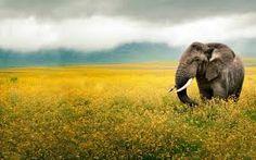 elefante - Buscar con Google