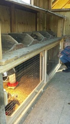 Brooder under nesting boxes in the coop. Features sliding doors! My husband is a genius! (Daniel B. you are the MAN!)