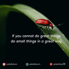 If you cannot do great things do small things in a great way. #Life #LifeQuotes #LifeStatus #Small #Big #Great #Good
