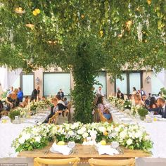 A breath-taking lemon tree took centre stage between the guests' tables with fairy lights ...
