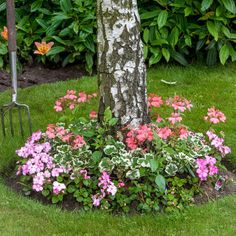 Landscaping Around Trees, Landscaping With Rocks, Front Yard Landscaping, Ranch Landscaping Ideas, Landscaping Equipment, Landscaping Design, Flower Bed Designs, Shady Tree, Garden Borders