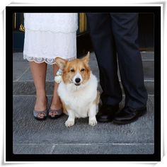 On our wedding day. #corgi