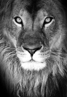lion eyes <3