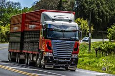 Road Train, Trucks, Buses, Rigs, New Zealand, Vehicles, Water Pond, Wedges, Busses