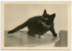 black cat on table, vintage snapshot