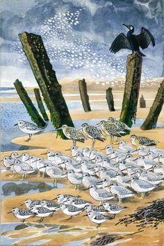 C F Tunnicliffe - Seabirds on a Beach