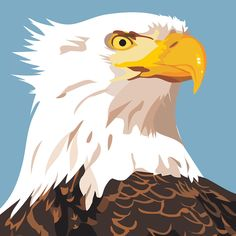 Bald Eagle digital illustration with Adobe Illustrator Material Design, Digital Illustration, Bald Eagle, Adobe Illustrator, Pop Art, Web Design, My Arts, Characters, Bird