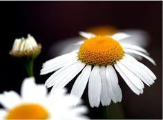 27 Medicinal Plants Worth Your Garden Space