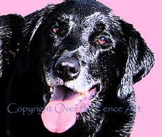 Dog Art Black Labrador Art Photo Greeting Card by overthefenceart