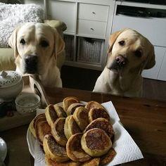 Andy, Aaron..moji kucí Labrador Retriever, Photo And Video, Videos, Instagram, Labrador Retrievers, Labrador, Labrador Retriever Dog