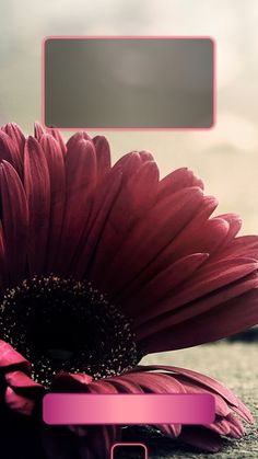 ↑↑TAP AND GET THE FREE APP! Lockscreens Art Creative Flower For Girls Red HD iPhone 6 Plus Lock Screen