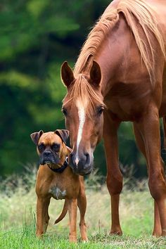 My two favorite types of animals in the whole world...a Quarter Horse and a Boxer...can't wait to have 4-legged babies again!