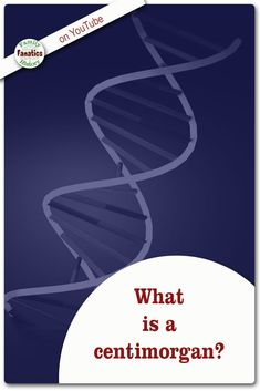 Learn the definition of a centimorgan and how it benifits genealogists. Dna Genealogy, Ancestry Dna, Dna Test Results, Contact List, Research Paper, Genetics, Family History, Climbing, Education