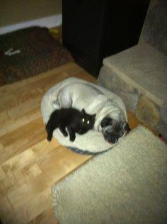 My dog diesel and cat Sadie
