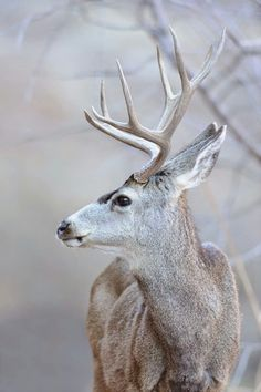 I don't believe I will ever take a photo of an alive deer even though I'm going into photography. I will be aiming at the deer with a gun and then taking a picture of the buck I just shot.