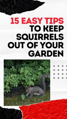 Are squirrels getting into your garden and destroying all of your flowers, vegetables, herbs, and fruits? If so, this article will teach you the 15 easy tips to keep squirrels out of your garden. #squirrels #howto #diy Herb Garden Design, Diy Garden Decor, Planting Vegetables, Growing Vegetables, Container Gardening, Gardening Tips, Plant Diseases, Front Yard Landscaping, Landscaping Ideas