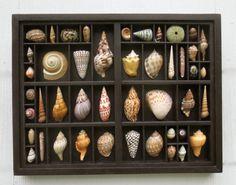 Kunst und Sammel Muschel Skulptur, Muschel-Collage, Muscheln im Relief, innerhalb eines Druckers mit aufgearbeiteten Holz Typ Schublade und gerahmt.
