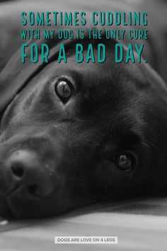 Better Pictures - Dog Quote - Sometimes cuddling with my dog. Dog, Dog Quotes Inspirational Quotes, Funny Quotes, Life Quotes To anybody wanting to take better photographs today I Love Dogs, Puppy Love, Cute Dogs, Dog Quotes Funny, Funny Dogs, Pet Quotes, Labrador Quotes, Cuddle Quotes, Animal Quotes