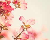 """Flower Photography - dogwood pink spring wall art floral photo coral salmon nature cream blossom fine art print - 8x10 Photograph, """"Dogwood"""""""