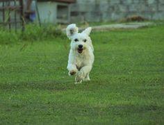 dog flying II