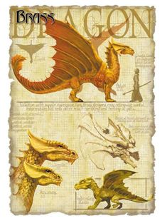 Dnd Dragons, Cool Dragons, Dungeons And Dragons, Mythological Creatures, Fantasy Creatures, Mythical Creatures, Dragon 2, Fantasy Dragon, Dragon Anatomy