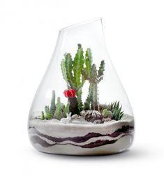 cacti terrarium idea's