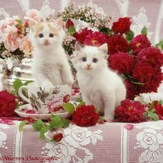 08188-Kittens-among-flowers (36 pieces)