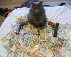 #Cashcats – Stinkreiche Miezen #katzenCashcats – Stinkreiche Miezen |