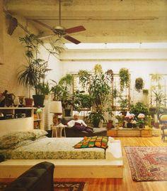 indoor plants <3