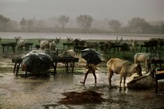 La India desde adentro, un viaje en imágenes guiado por el célebre fotógrafo Steve McCurry