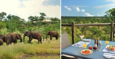The Elephant Camp waterhole & breakfast deck Elephant Camp, Inclusive Holidays, 404 Pages, Private Viewing, Okavango Delta, Victoria Falls, Plunge Pool, Lodges, Safari
