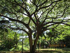 Allerton Gardens Kauai, Hi