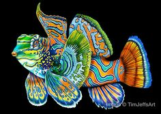 mandarinfish Colored Pencil Drawing