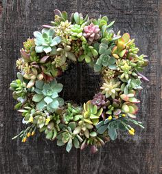 "9"" 'Spring Fling' living Succulent Wreath- Makes a great spring decoration, Birthday, Anniversary, or wedding gift"