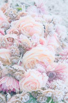 Frozen flowers.