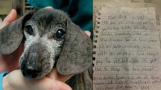 81fee9b7079 Elderly Couple Leaves Dog They Can No Longer Care for Outside Shelter With  Heartbreaking Note