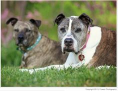 """OLD DOGS: Gabby and Sunny. Fusaro's two dogs are pictured here: Sunny in front, and Gabby, who also is a senior dog. Fusaro rescued Gabby when she was 2 years old. Gabby """"loves playing with her doggy friends and has a kitty boyfriend named Enzo,"""" Fusaro said. """"Enzo grooms her every morning and sleeps with her at night."""""""