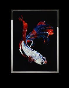 Michele Astolfi, Fighting fish, plexiglass, Swarovski, Mother of pearl, steel, 60 x 80 cm