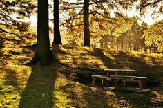 Yateholme Woods, by David Lawson Photography, sent into www.holmfirth.info