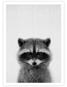 THE PRINTThis delightful peekaboo woodland raccoon print is the perfect addition to any nursery. The background of the image has a subtle fabric like texture which adds to the warm inviting tone of the artwork. This premium quality gic. Animals And Pets, Baby Animals, Funny Animals, Cute Animals, Woodland Animal Nursery, Woodland Animals, Art Mural, Wall Art, Animals Black And White