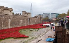 Dismantling Poppies At Tower Of London