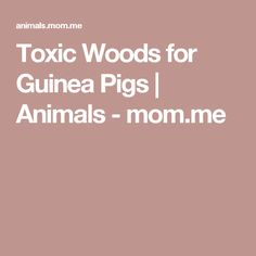 Toxic Woods for Guinea Pigs | Animals - mom.me