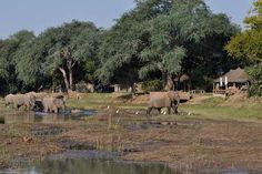 Photographic safaris to Mana Pools, Zambezi, Zimbabwe. image: Ruckomechi Camp