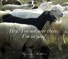 Hey! I'm not over there, I'm in you! - Byron Katie