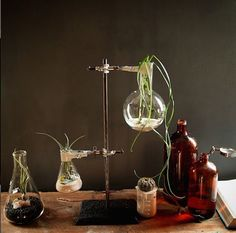 unique home decor from Nightshade Studio. Science/chemistry interior design. terrariums made from beakers, conicals, and other lab ware.